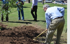 Planting a tree in Armory Park.