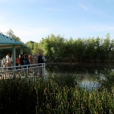 Picture of a gathering standing on a view point over a pond at Sweetwater Wetlands.